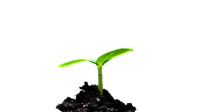 The growth of young green plants video