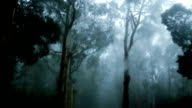 The Haunted  Forest video