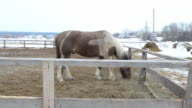 The horse in the paddock, in the winter. video