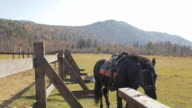 The horse with complete harness is standing next to the fence outside video