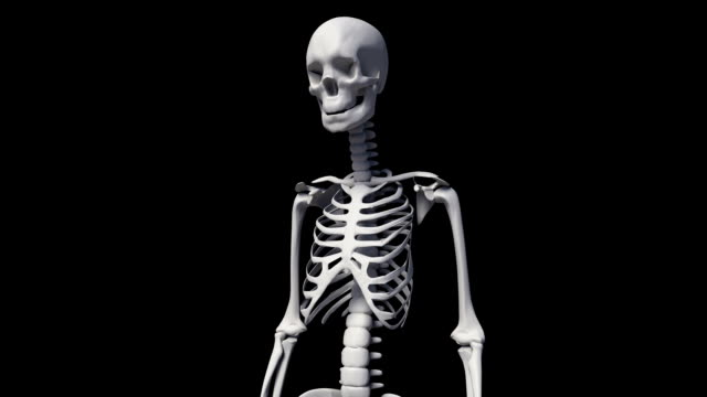 The Human Skeletal System video