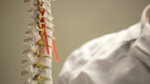 The layout of the vertebrae of the human spine, close-up, doctor shows it video