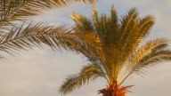 The leaves of the palm tree lit by the rays of the rising sun video