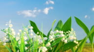 The lily of the valley on the cloud background video