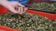 The male's hand touching the olives are in plastic boxes. video