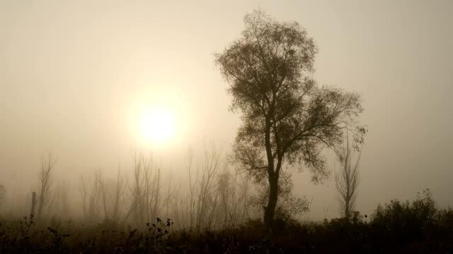 The Morning Smoke at Beautiful Sunrise video
