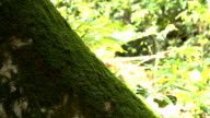 The moss in nature. video