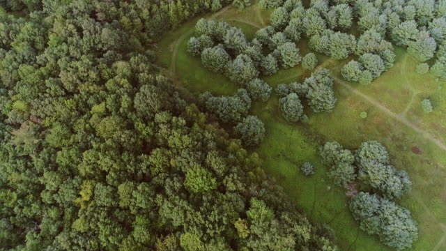 The panoramic aerial drone view to the forest in the Pocono Mountains at the summer sunny day. video
