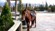 The pony video