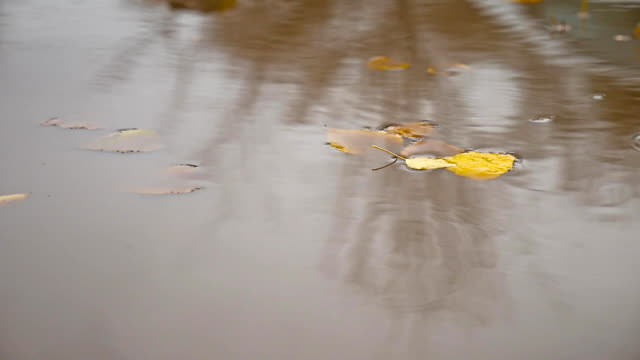 the rain in the fall in a nature puddle of yellow leaves floating trees video