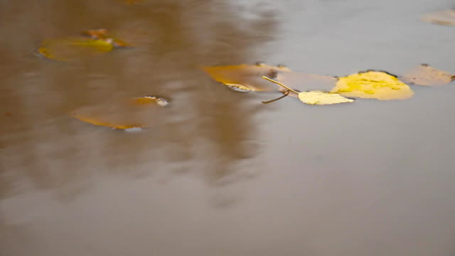 the rain in the fall in a puddle of yellow leaves nature floating trees video