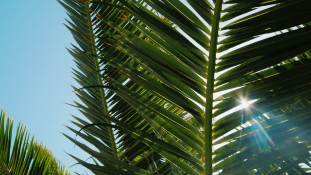 The rays of the sun shine through the leaves of the palm tree against the blue sky. Concept - rest in the resort. Crane shot video