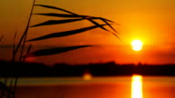 The Reeds on Sunset Landscape With Sun and Water Background video