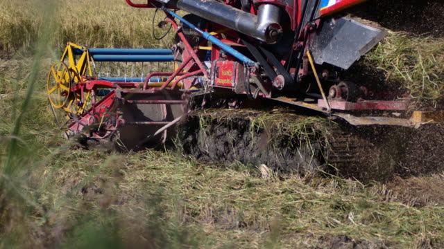 The rice harvest with a car video