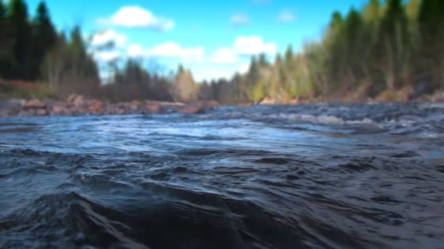The river video