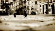 The Rynok (Market) Square in Lviv, Ukraine. video