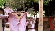 The sacred tulasi plant and a huge banyan tree video