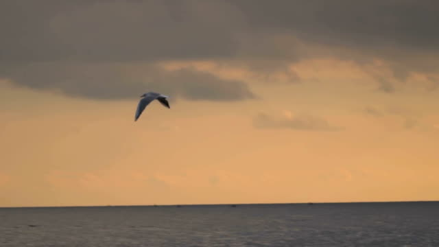 The seagull is flying over the sea against the background of the evening sky. video