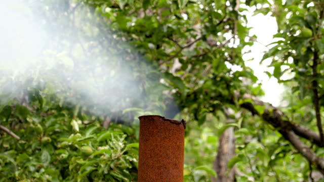 The smoke from the rusty metal pipe on the background of Apple trees video