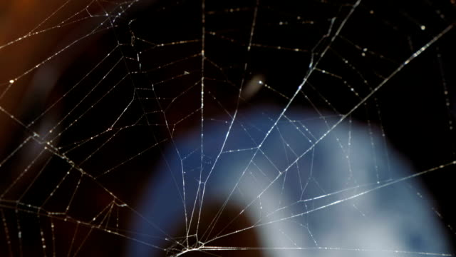 The Spider Web close up. Slow motion video