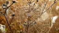 The Spider Web Closeup Background video