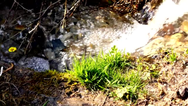 The stream with clear water gurgling in a forest clearing. Sunny spring day. video