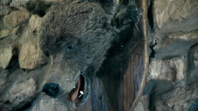 The stuffed brown bear. Krasnoyarsk region. Siberia. Russian Federation. (Panorama) video