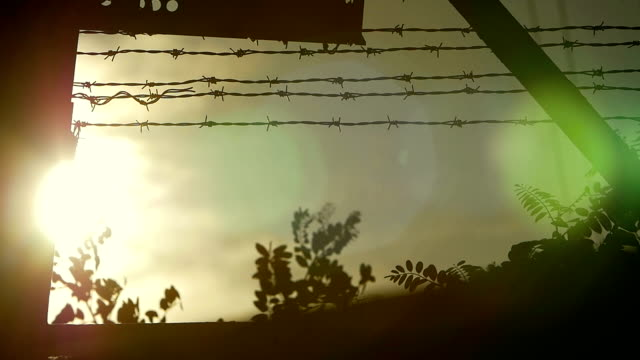 the sun beyond the barbed wire video