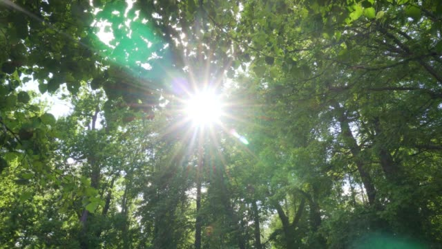 The sun breaks through the branches of trees video