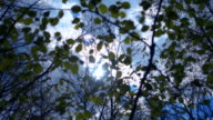 The sun in the blue sky shining through the foliage on a tree branch video