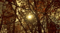 The sun in the sky shining through the autumn orange  foliage on a tree branch video