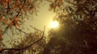 The sun in the sky shining through the foliage on a tree branch video