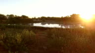 The sun is setting over a beautiful reflective lake in a fruit orchard video