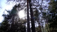 the sun shines through the trees in the forest video