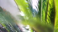 The sun's rays make their way through the branches of palm trees video