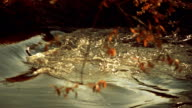 The surface of the river reflects the sky, through the foliage is visible waves video