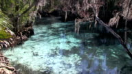 The Three Sisters Spring near Crystal River video