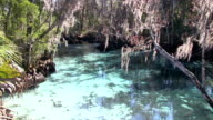 The Three Sisters Springs near Crystal River video