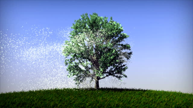 The Tree in Four Seasons video