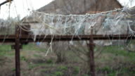 The vegetable garden, rope for tying vegetables, sway in the wind on a spring cloudy day. Detail of ropes used for tomatoes and other plants cultivated in a garden of house video
