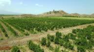 The vineyard at the foot of Khor Virap video