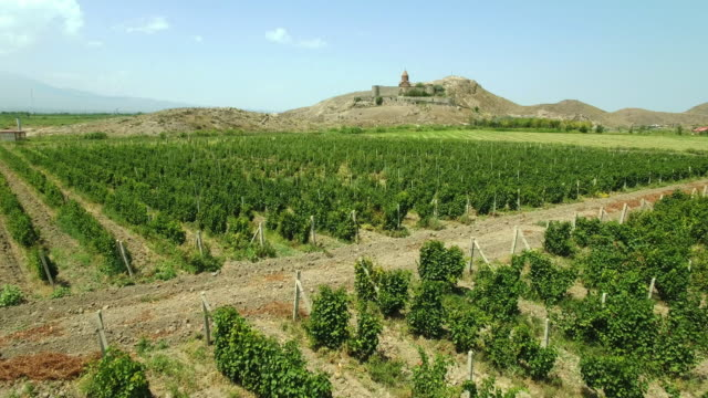 The vineyard at the foot of Khor Virap video