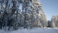 The winter look in the forest in Estonia video