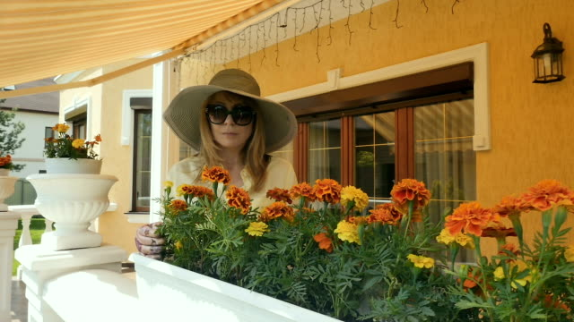 The woman in hat works with marigolds in pots video