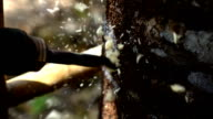 The worker drilling agarwood producing oil,Slow motion video