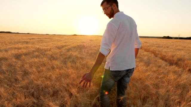 The Young Farmer Moves Along the Wheat Field video