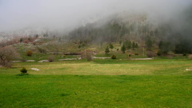 Thick fog in the forest and in the mountains in the village of N video