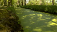 CLOSE UP: Thick layer of green algae and small dried leaves in water canal video