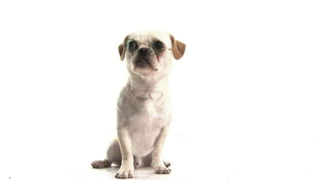Thinking Dog .. video