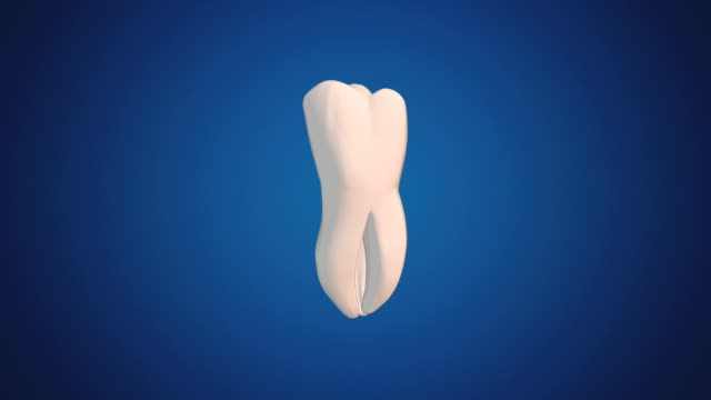 Third Molar/Wisdom Tooth video